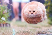 Les photos de chats prises au parfait timing / Toutes les photos de chats prises au moment opportun ce qui donne un résultat hilarant !
