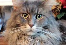 Here kitty kitty / All cats / by Lynn Guerrero Goldman