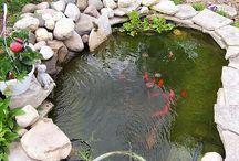 rybniky
