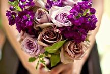 Colour ~ Purple People Eater