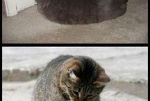lustige Katzen