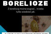 Borelioza