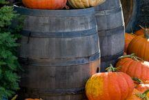 Halloween/fall decorations / by Amanda Outcalt