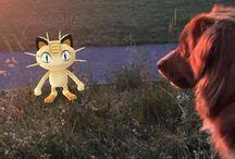 Quand les Wamiz chassent les Pokemon / Quoi de mieux qu'une bonne chasse de Pokemon accompagné de son fidèle compagnon à quatre pattes ?