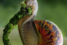 Snails :)