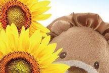 GUND Product Picks / Every week we showcase a few of our great products with fun graphics and designs.