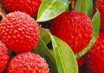 fruit / by ℳiền Tây ℳUA ♥ レ O √ 乇