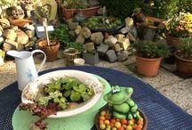 Mijn tuin / Mijn  tuin in de zomer en begin herfst 2015 .   Er is ook een foto bij van een overstroming in de tuin,na een zware regenbui
