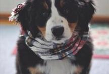 Doggies  / by Kailyn Hostetler