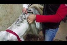 Hesteflette