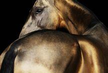 копытные / лошади, олени