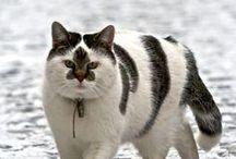 kedilerköpekler