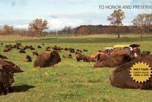 Wild Winds Buffalo Preserve