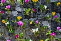 Rock Wall flowers / by Deb Denning