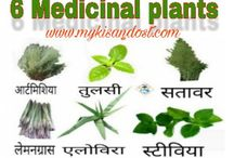 Best Medicinal Plants / Best Medicinal Plants