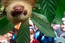 Photo Bomb! / by Natalie Michelson