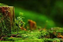 The beauty in forest