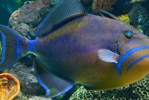Balıklar / Balıklar ile ilgili bilgiler, komik anlar, videolar... Kısacası balıklara dair her şey!