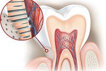 Στοματική Υγιεινή // Dental Hygiene