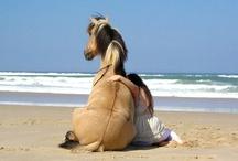 Horses / by Krista Morris