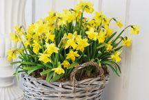 Blumenampel / Bepflanzungen