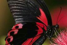 Schmetterlinge & Motten