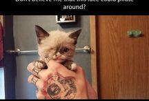 For kittens