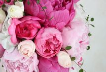 Любимые цветы )))