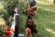 Hobby farming