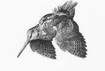 Wildlife art / Animal drawing, wildlife, birds, woodcock, moose.