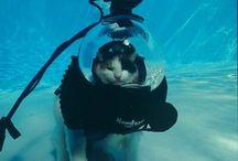 La vida acuática
