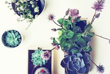 succulents and such / by SumYee