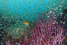 Reef Life