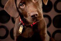 υπέροχα σκυλιά