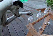comedero y juegos perros