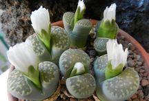 Succulents ^^,)