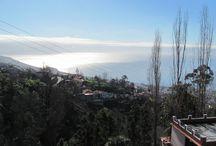 Madeira / Hier lässt es sich auch im Januar gut aushalten, bei nur 4,5 Std. Flug.
