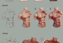 anatomy study : torso 2 (old)
