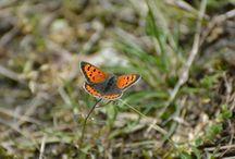 Butterflies / Zelf gefotografeerd