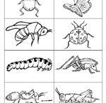 Theme - Bugs / preschool, kindergarten homeschool Bugs unit, printables, songs, fingerplays, etc.