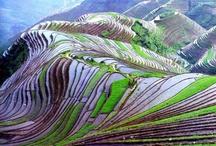 Manmade landscapes