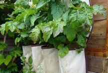 LaRosa - Gardening