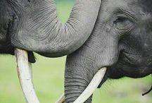 Elephants / by Catherine Seiler