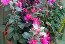 Moja záhradka na balkóne / zelenina, kvety, výhľad