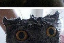 Kattlærv