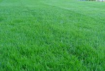 Lawn Care / How do you keep a lawn looking great?
