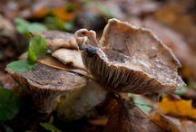 Fun Fungi Facts!