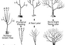 Pruning trees and shrubs / General pruning, both winter and summer
