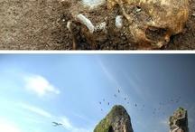 skamieniałości