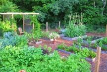 Garden <3 / by cc mira